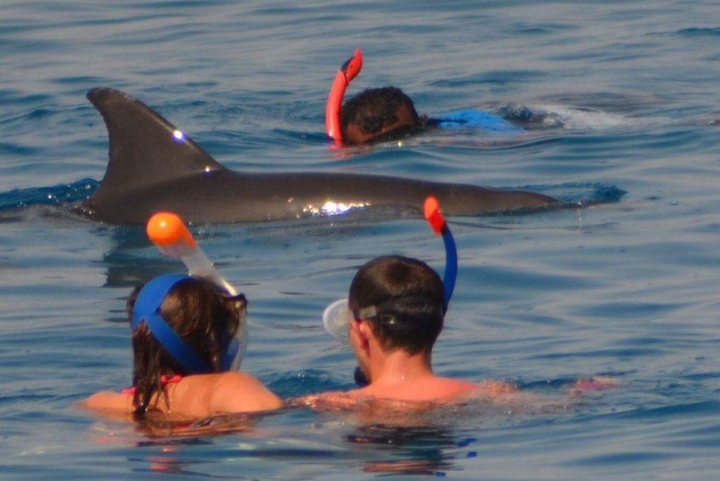 Delfinschwimmen hurghada& Delfin tour 10 €