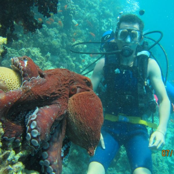 Hurghada Octopus