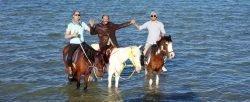 Jazda konna w Hurghadzie 20 € Nasze konie są odpowiednie