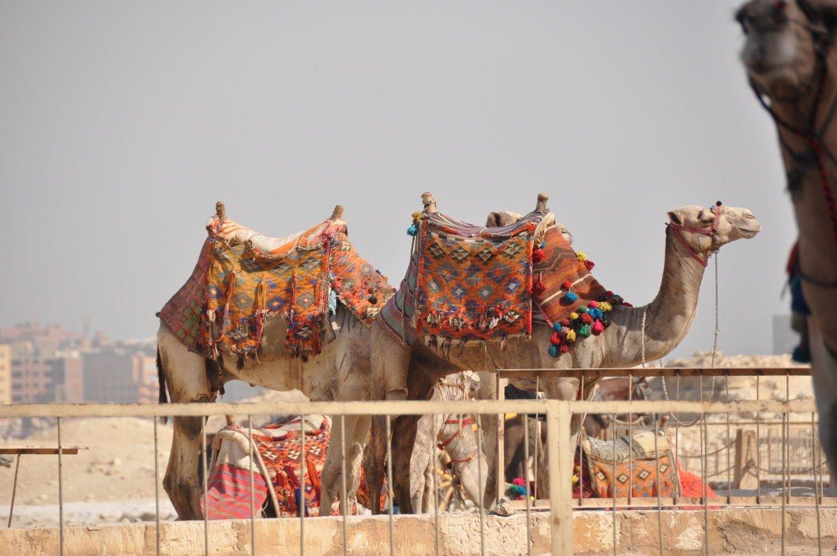 Хургада в Каир, Приглашаем вас провести с нами 2 замечательных дня в Каире!