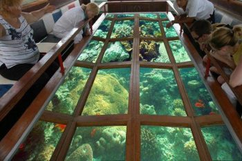coral-reef-glass-boat