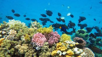 coral-reef-red-sea