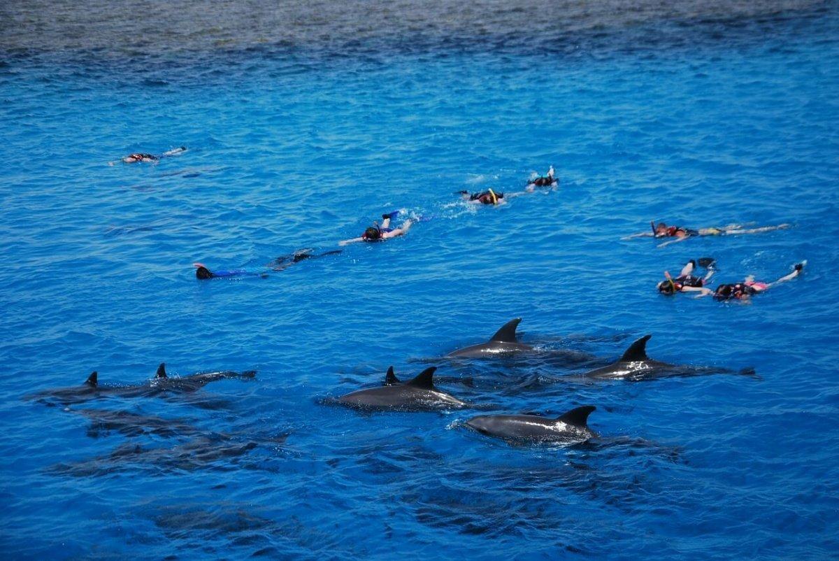 dom delfinów Hurghada 18 € Pływanie z delfinami egipt