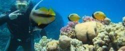 Búvár képzés diving Kurs nurkowania Open Water Diver PADI Hurghada 220 €