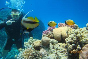 Kurs nurkowania Open Water Diver PADI Hurghada 220 €