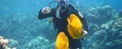 курсы дайвинга PADI PADI Tauchkurs Open Water 275 € | Diver in traumhafter Umgebung