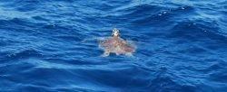 Дом Дельфинов Северное побережье Красного моря близ Хургады