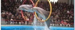 Dolphin Show Hurghada 20 € Don't miss this wonderful chance