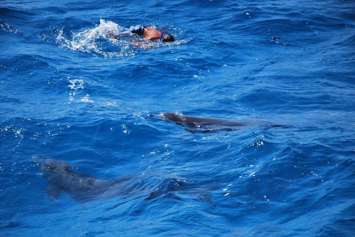 Dolphin Hausehoz