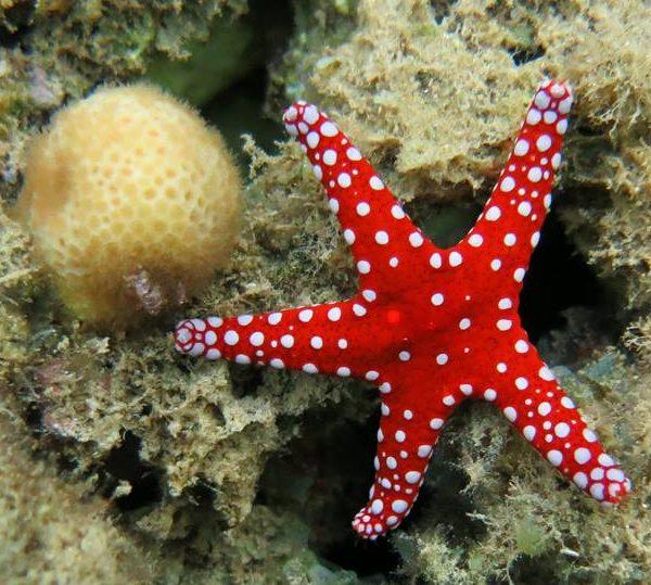 Hurghada Introduction Dive