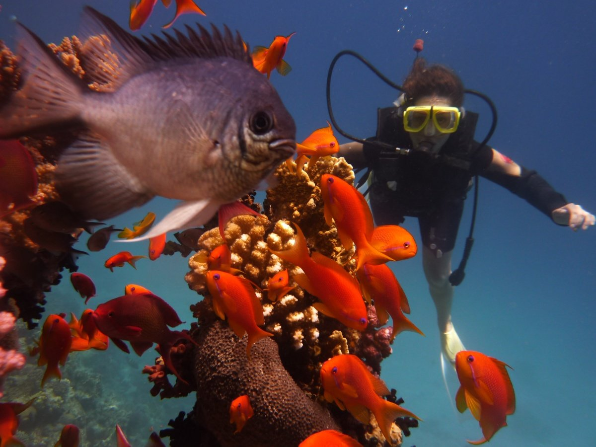 Hurghada Diving 35 € - Come with us for our daily dive boat trip