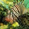 Sharm El Naga schnorchel 35 € | das Schnorchelparadies mit Hausriff