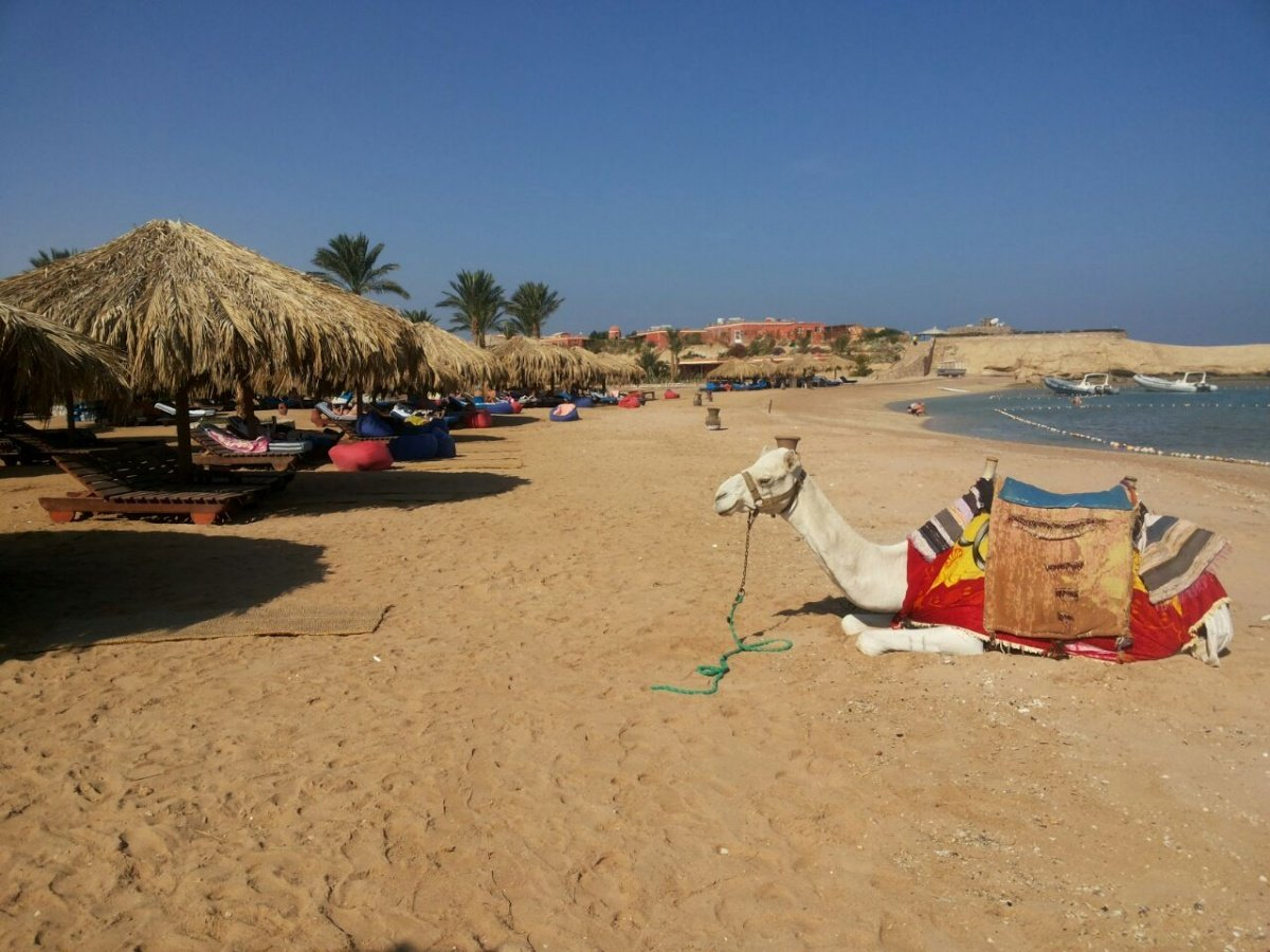 Sharm El Naga schnorchel ausflug per bus 35 €