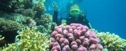 Giftun sziget Giftun Insel Ausflug Hurghada 20 € - erleben Sie die paradiesische Insel