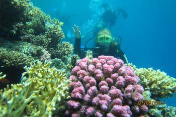 остров Гифтун хургада Giftun Insel Ausflug Hurghada 20 € - erleben Sie die paradiesische Insel